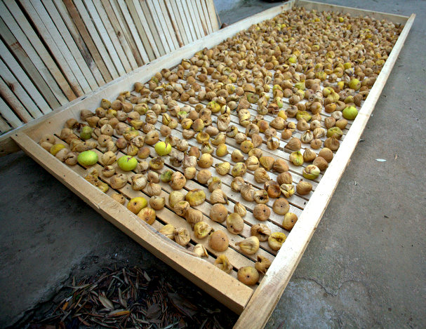 figs drying on a specially made wooden pallet