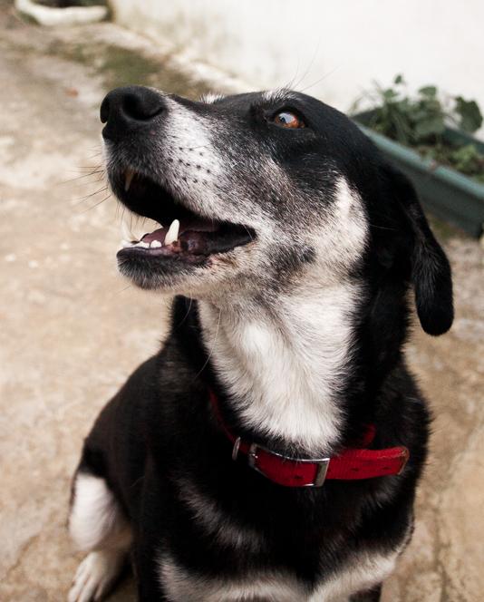 Dog dog.