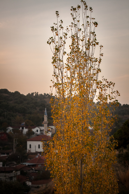 Autumn colours in the village.
