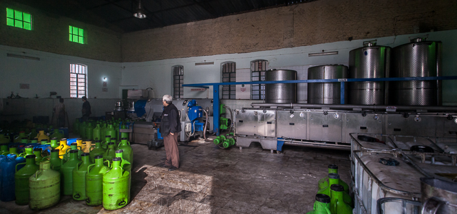 A line of machines for crushing the olives and filtering the oil.