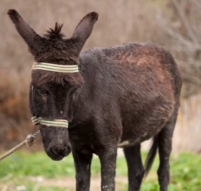 Donkey is feeling a bit morose.