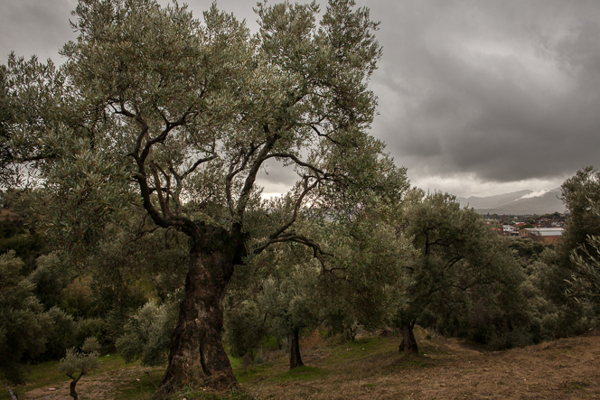 View looking out over the neighbouring olive groves.