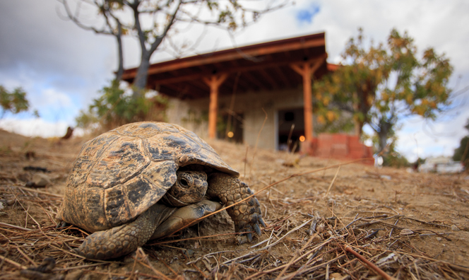 Sorry, no cat or dog photos. Will you accept a tortoise?